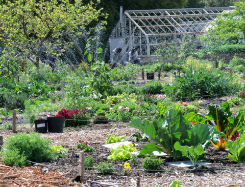A Walk in the Garden; Interview with David King