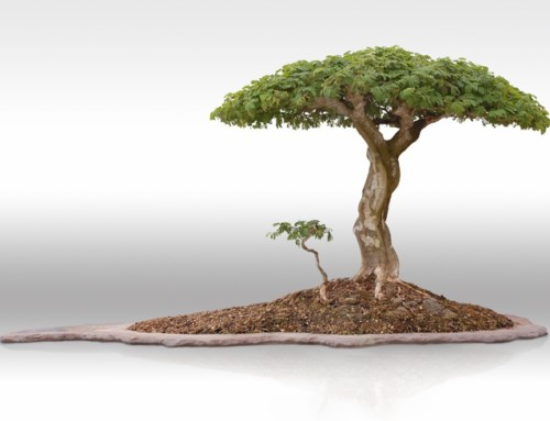 Feng Shui – Adding Metal Element to Your Home Tropical Bonsai