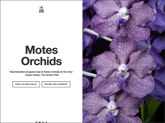 Motes Orchids