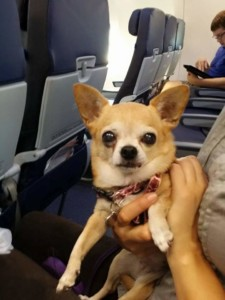 Rita on the plane.